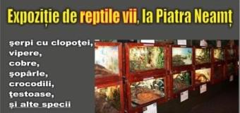 Expoziție de reptile vii, la Piatra Neamț