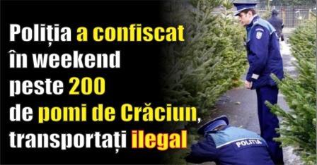 Poliția a confiscat în weekend peste 200 de pomi de Crăciun, transportați ilegal