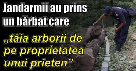 """Jandarmii au prins un bărbat care """"tăia arborii de pe proprietatea unui prieten"""""""