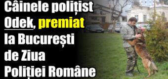 Câinele polițist Odek, premiat la București de Ziua Poliției Române
