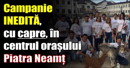 Campanie INEDITĂ, cu capre, la Piatra Neamț