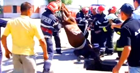 Misiuni ISU Neamț – incendiu în Piatra-Neamț și cal căzut într-un puț